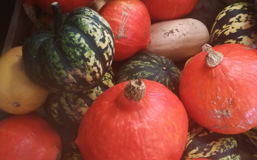 September, squashes and seasonal changes..