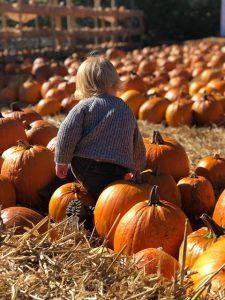 Pumpkins at Cammas Hall Farm