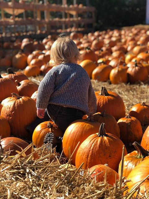 Pumpkins galore at the farm!