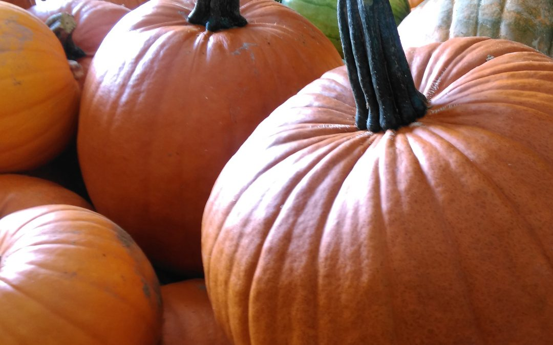 The fruit fields are now closed as we say hello to pumpkin season here at the farm!