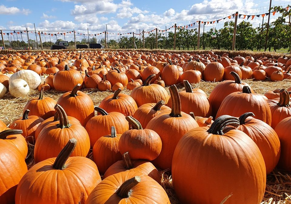 31st October – Happy Halloween! We still have plenty of pumpkins left!