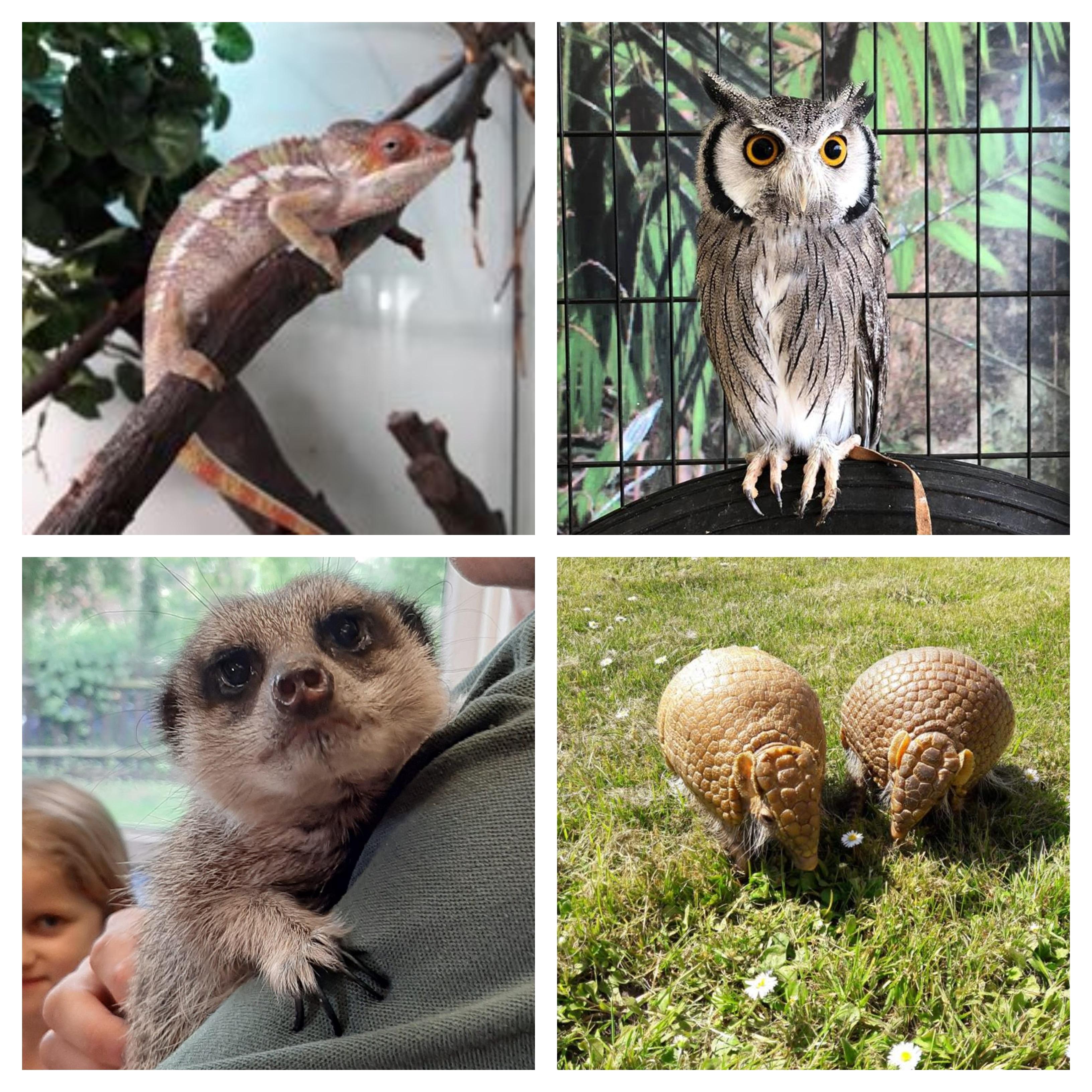 Garg's Animal Show
