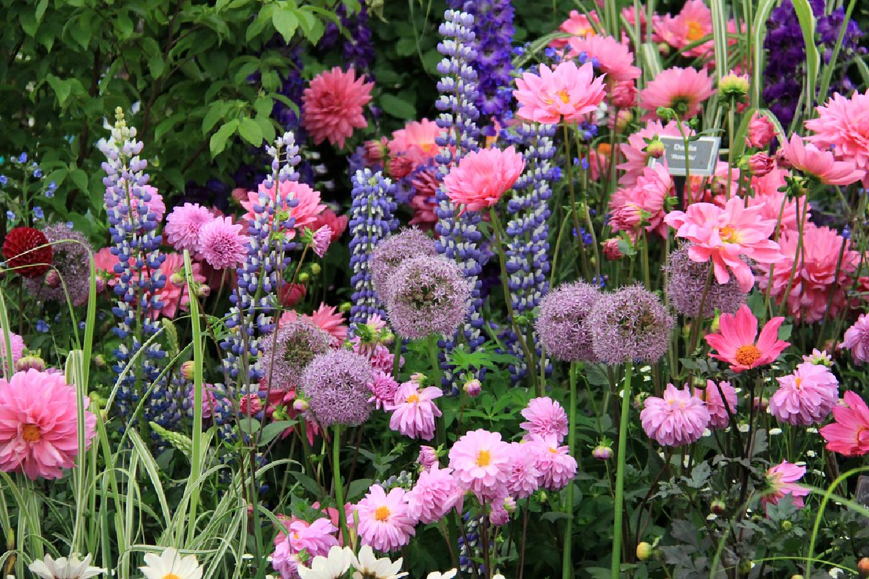 Advice based on inspiration from Chelsea Flower Show 2020