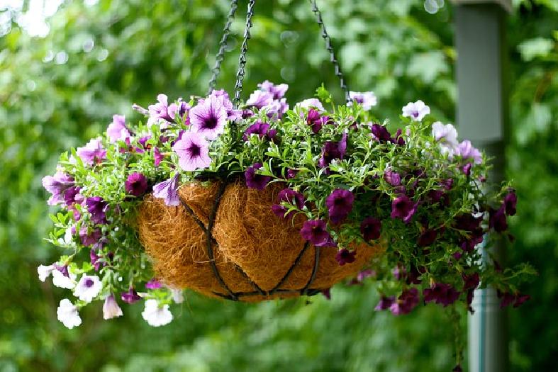 Hanging Baskets – made to order