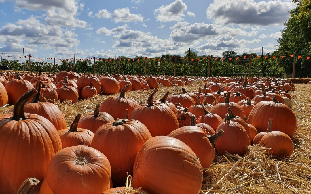 Farm closed 28th to 30th September as we prepare for Halloween!